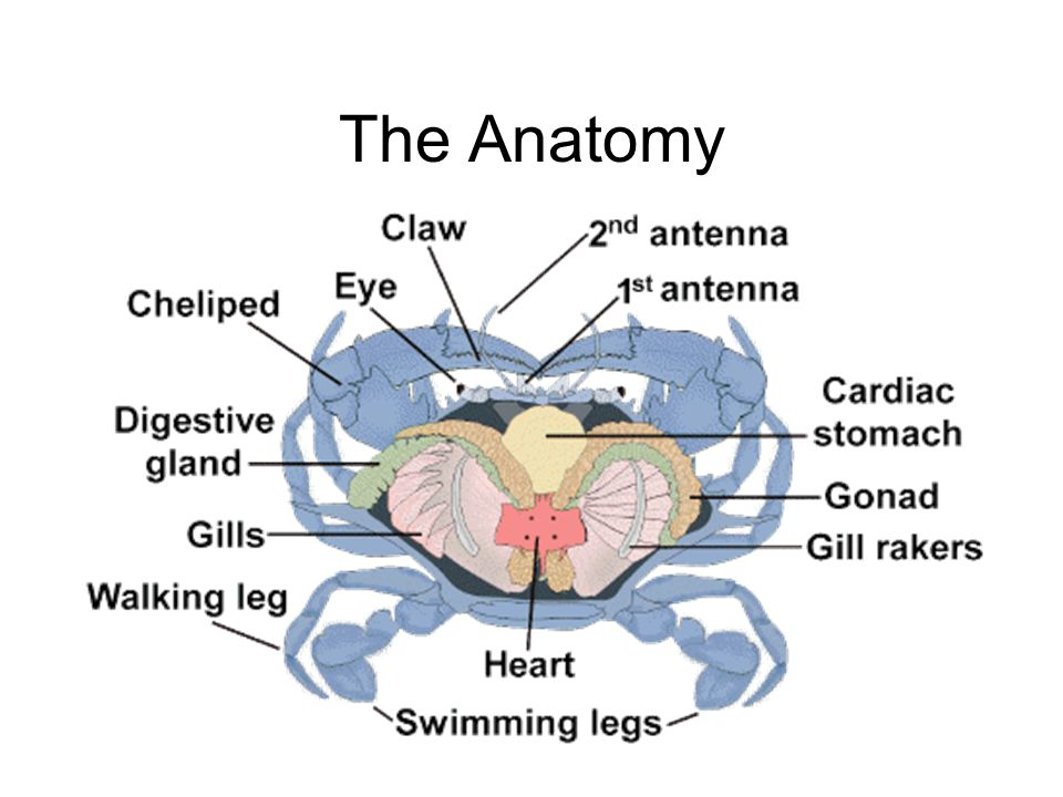 The Anatomy