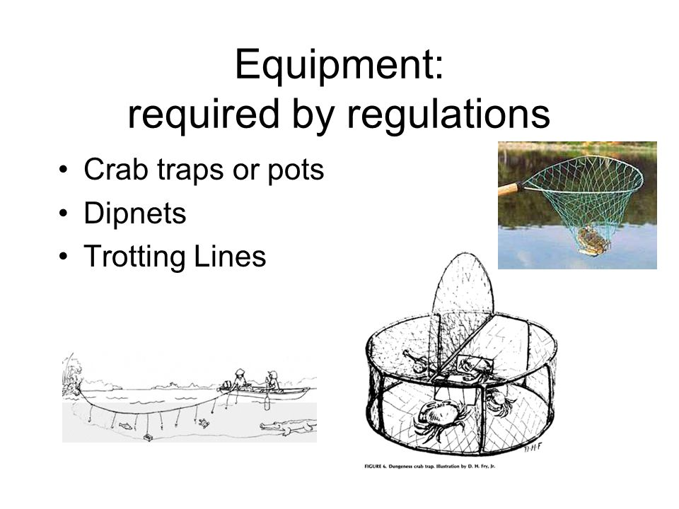 Equipment: required by regulations Crab traps or pots Dipnets Trotting Lines