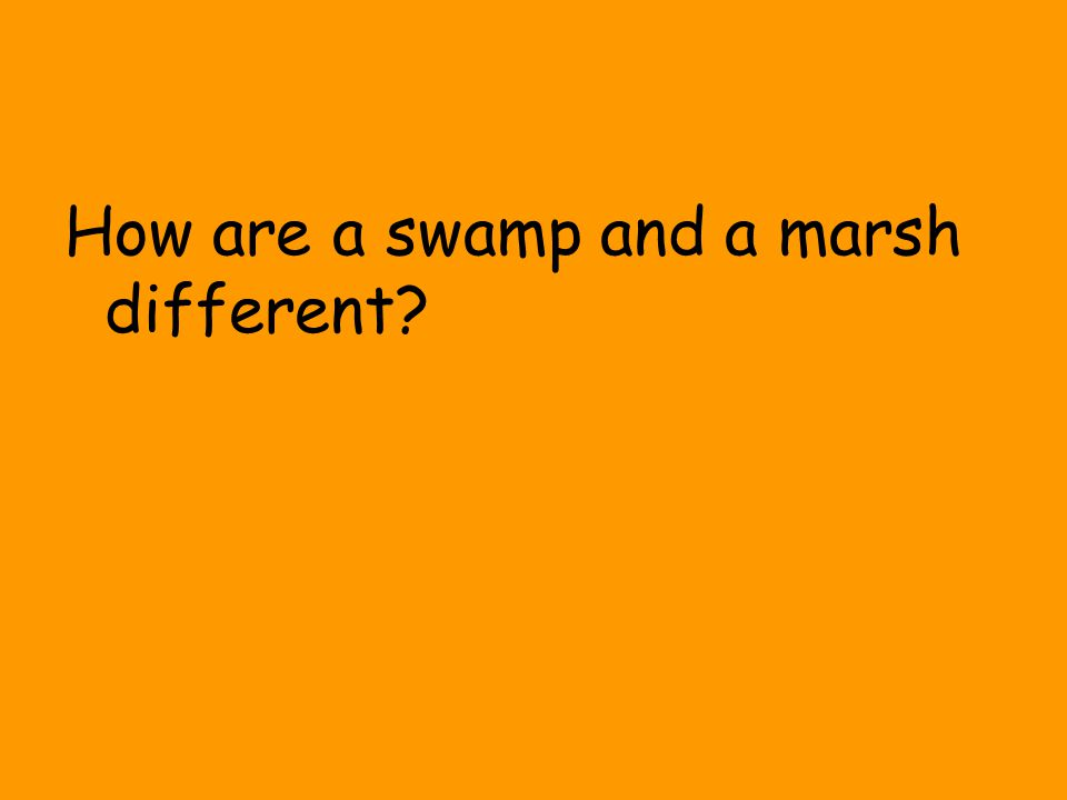 How are a swamp and a marsh different?