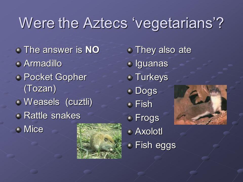 Were the Aztecs 'vegetarians'? The answer is NO Armadillo Pocket Gopher (Tozan) Weasels (cuztli) Rattle snakes Mice They also ate IguanasTurkeysDogsFi