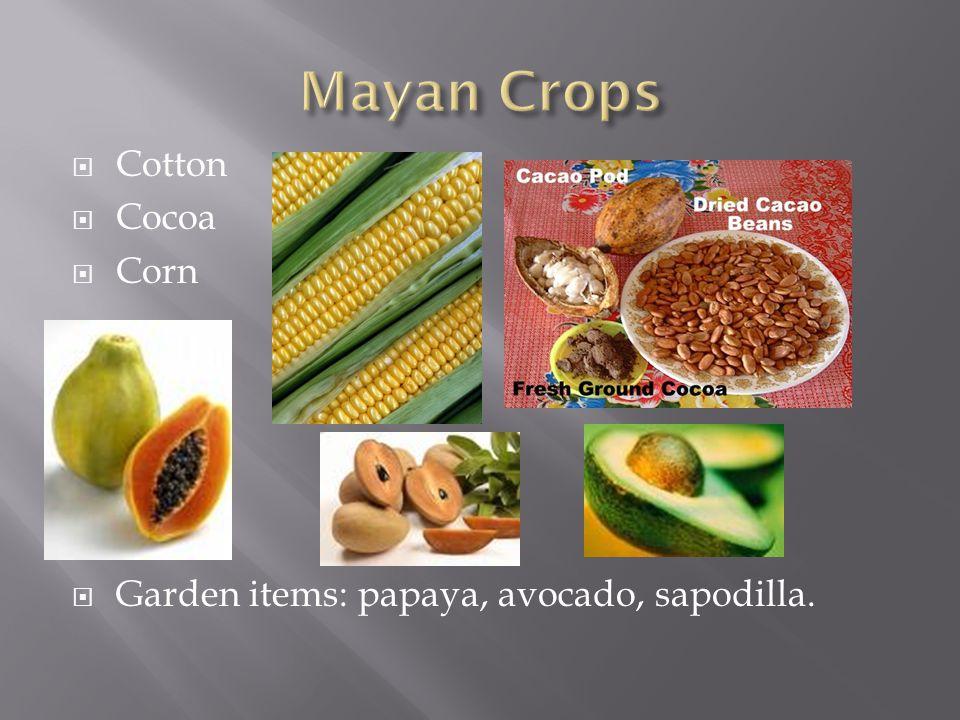  Cotton  Cocoa  Corn  Ga  Garden items: papaya, avocado, sapodilla.