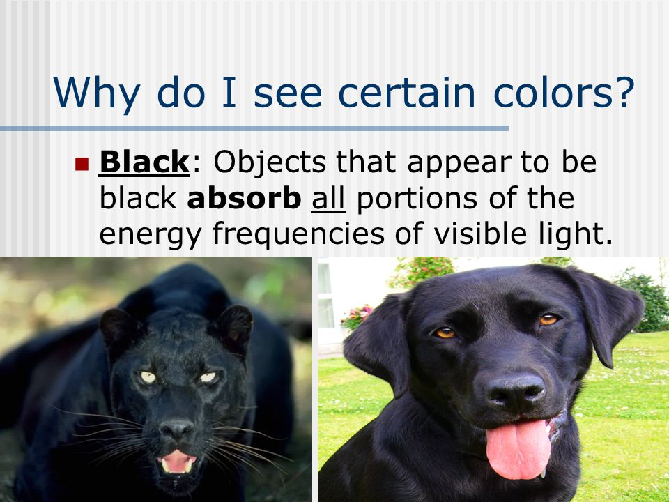 Why do I see certain colors? Black: Objects that appear to be black absorb all portions of the energy frequencies of visible light.