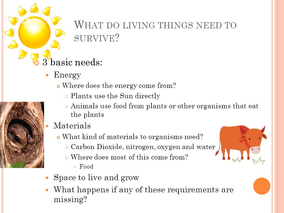 W HAT DO LIVING THINGS NEED TO SURVIVE . 3 basic needs: Energy Where does the energy come from.