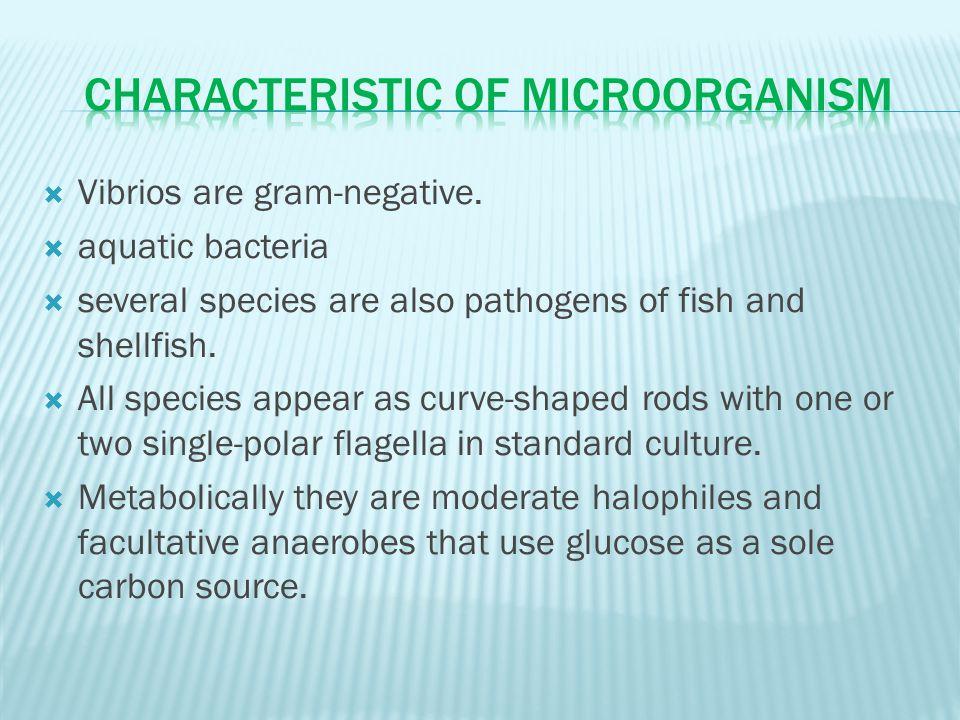  Vibrios are gram-negative.