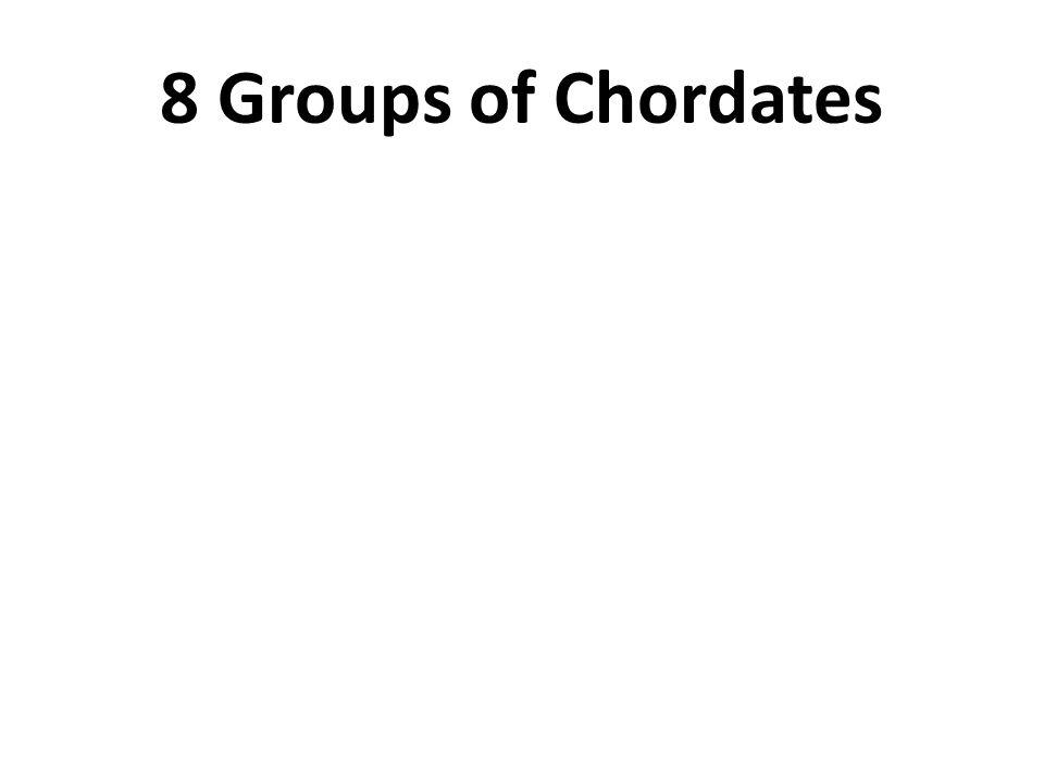 8 Groups of Chordates