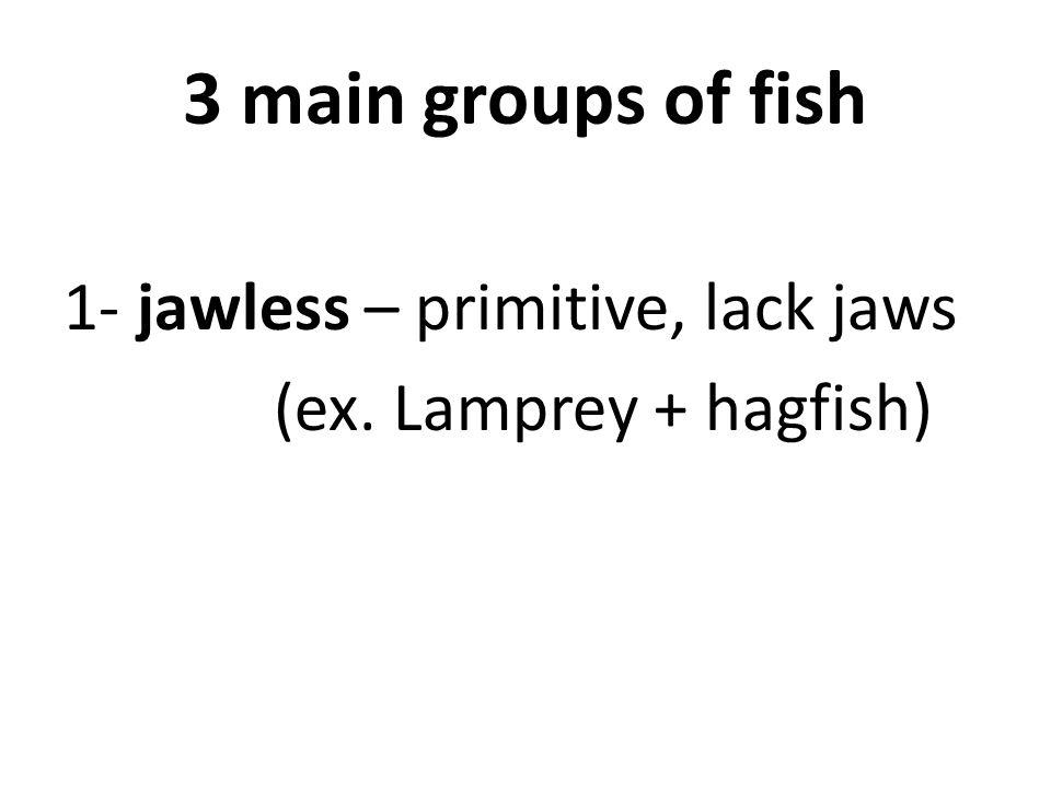 3 main groups of fish 1- jawless – primitive, lack jaws (ex. Lamprey + hagfish)