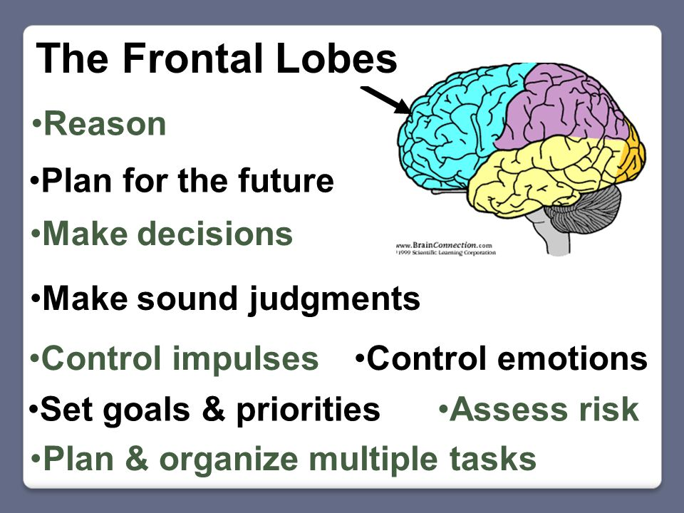 Plan for the future Make decisions Control impulses Assess riskSet goals & priorities Make sound judgments Reason Plan & organize multiple tasks Control emotions The Frontal Lobes
