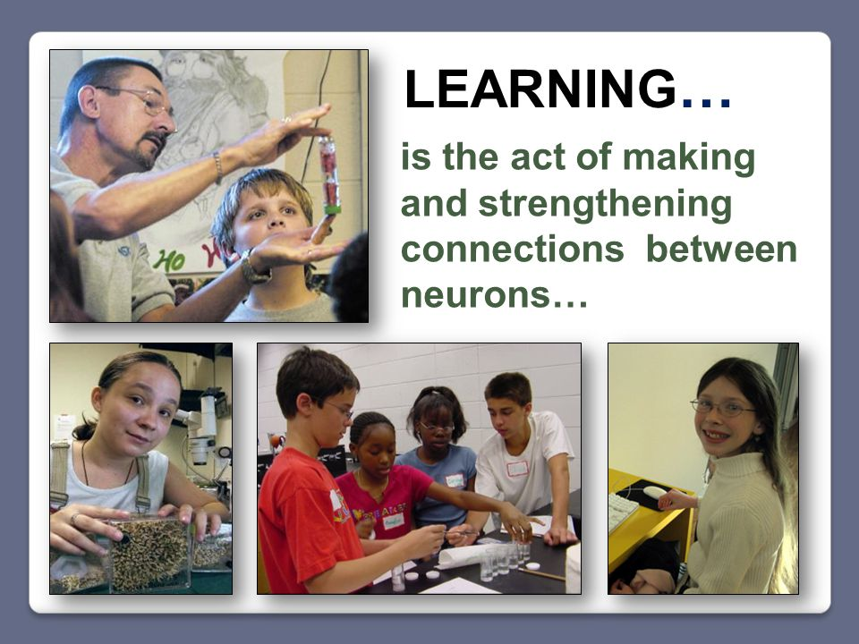 is the act of making and strengthening connections between neurons… LEARNING …