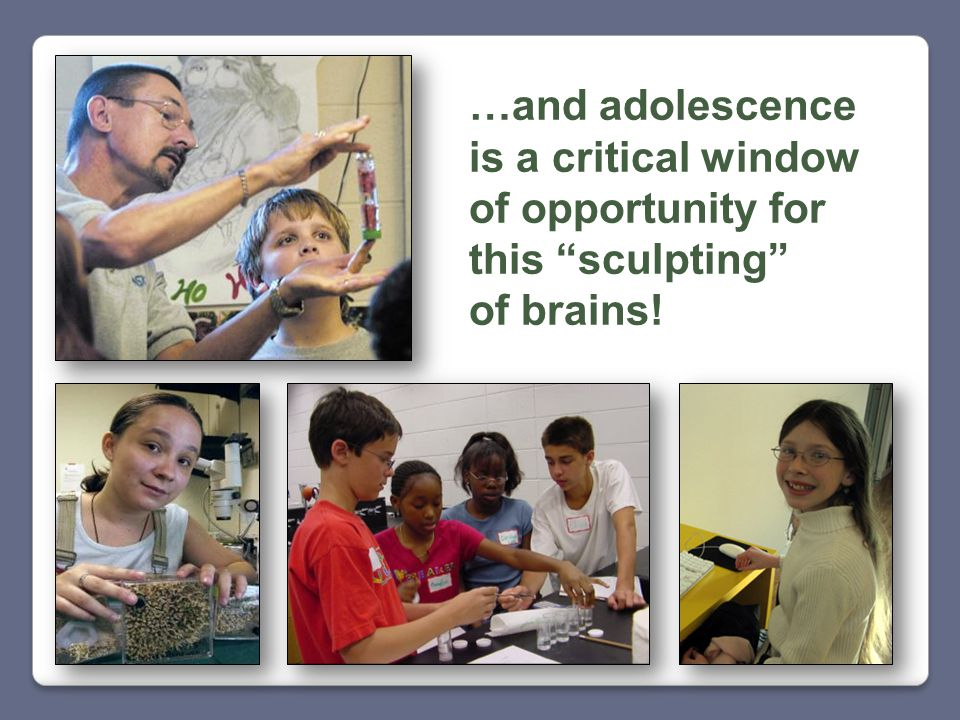 …and adolescence is a critical window of opportunity for this sculpting of brains!