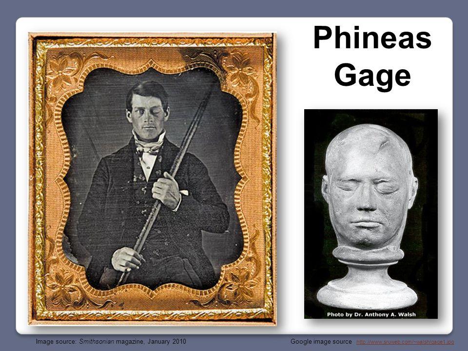 Google image source : http://www.sruweb.com/~walsh/gage1.jpghttp://www.sruweb.com/~walsh/gage1.jpg Phineas Gage Image source: Smithsonian magazine, January 2010