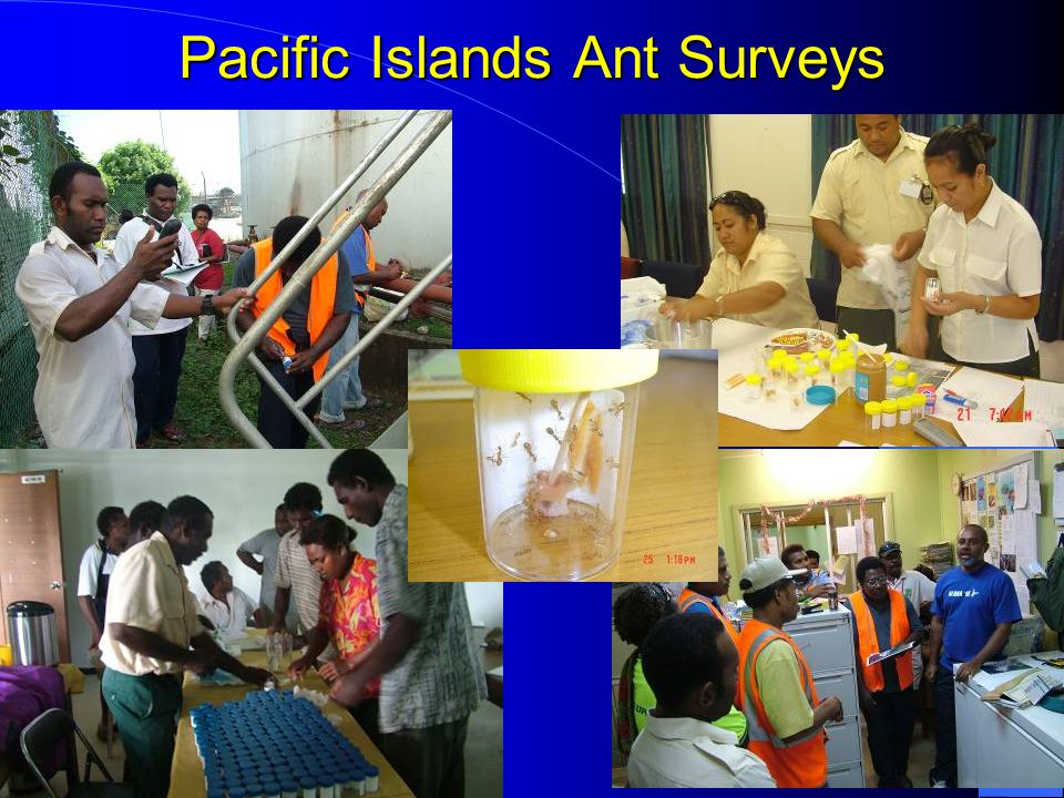Pacific Islands Ant Surveys