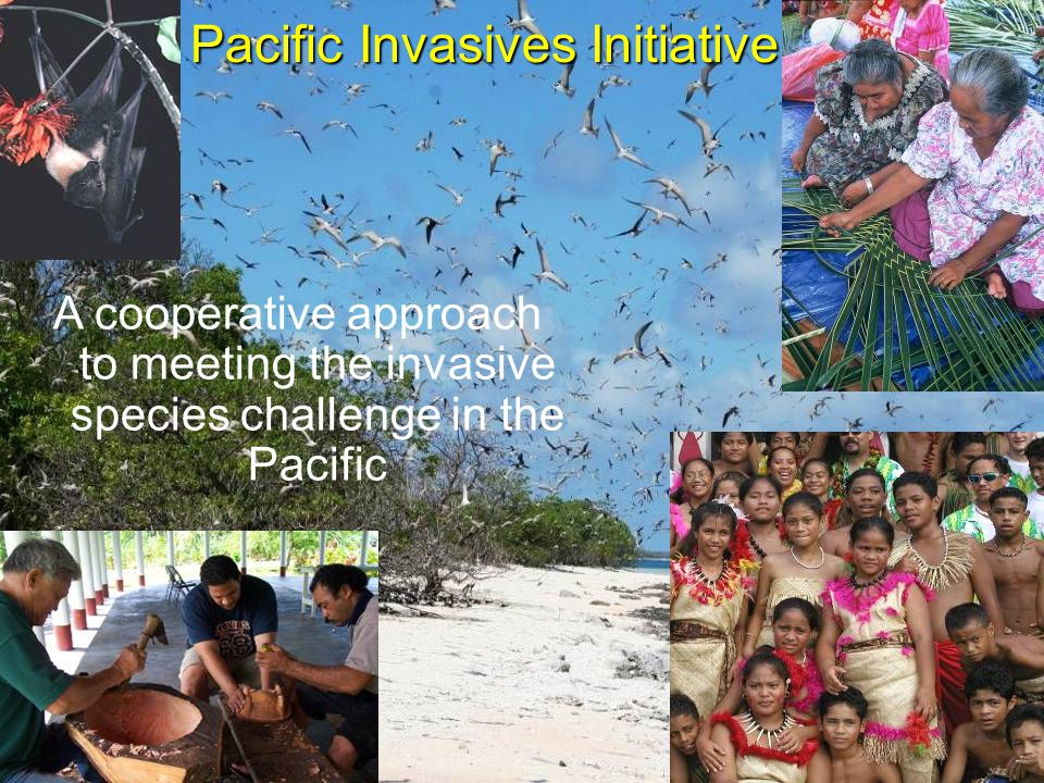 A cooperative approach to meeting the invasive species challenge in the Pacific Pacific Invasives Initiative