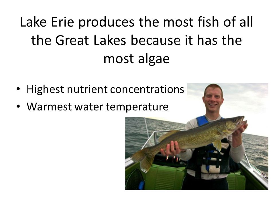 Lake Erie produces the most fish of all the Great Lakes because it has the most algae Highest nutrient concentrations Warmest water temperature