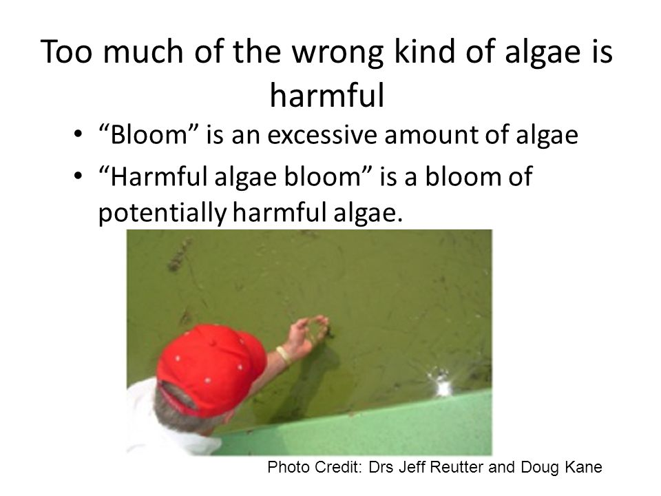 Too much of the wrong kind of algae is harmful Bloom is an excessive amount of algae Harmful algae bloom is a bloom of potentially harmful algae.