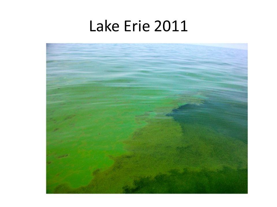 Lake Erie 2011