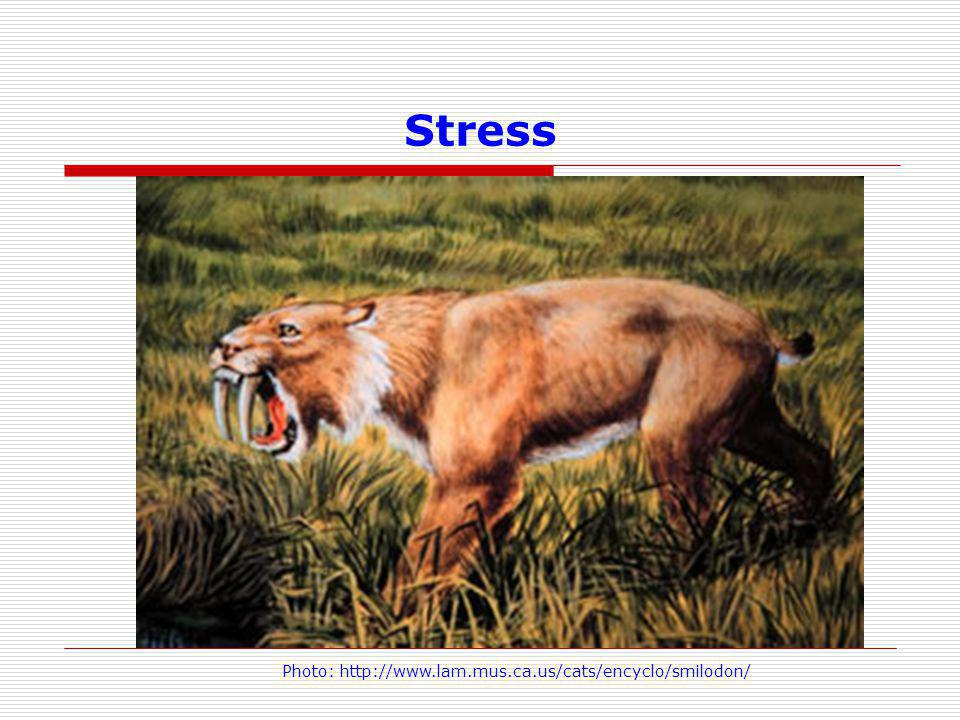 Stress Photo: http://www.lam.mus.ca.us/cats/encyclo/smilodon/