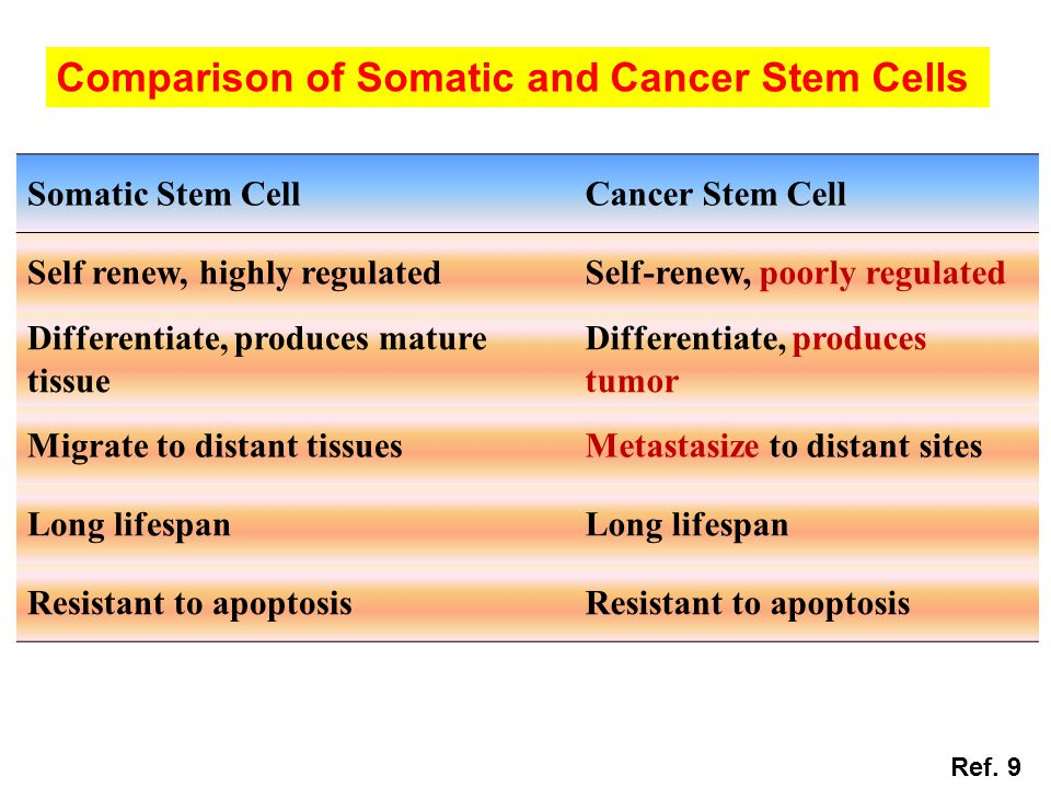Comparison of Somatic and Cancer Stem Cells Somatic Stem CellCancer Stem Cell Self renew, highly regulatedSelf-renew, poorly regulated Differentiate,