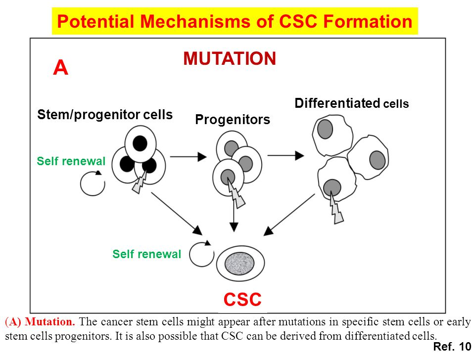 Potential Mechanisms of CSC Formation CSC MUTATION A Progenitors Self renewal Stem/progenitor cells Differentiated cells (A) Mutation. The cancer stem