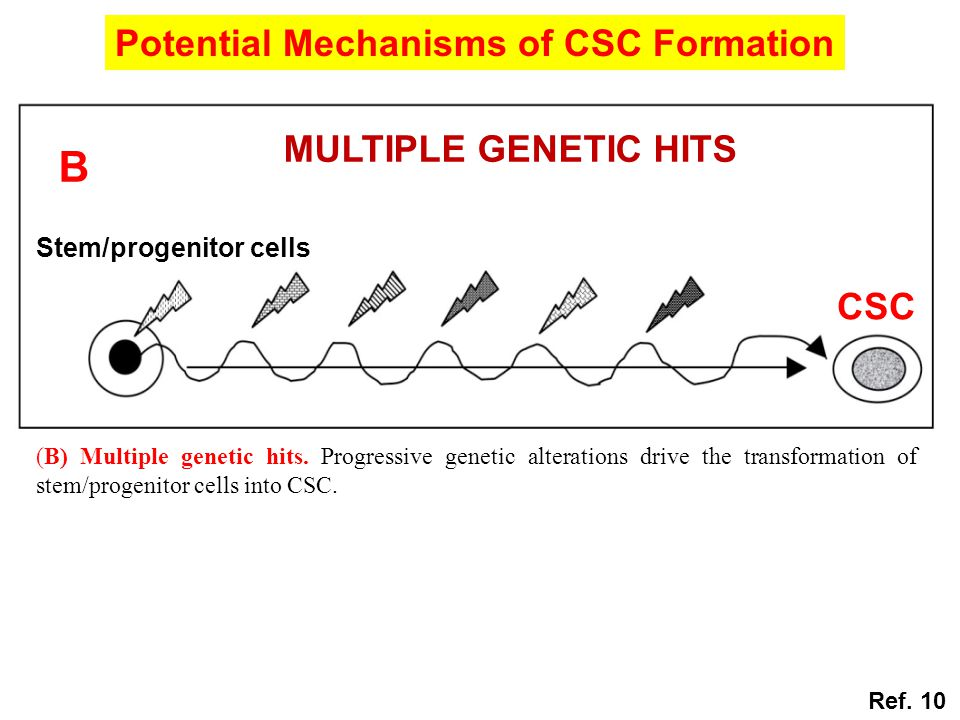 (B) Multiple genetic hits. Progressive genetic alterations drive the transformation of stem/progenitor cells into CSC. CSC MULTIPLE GENETIC HITS B Ste