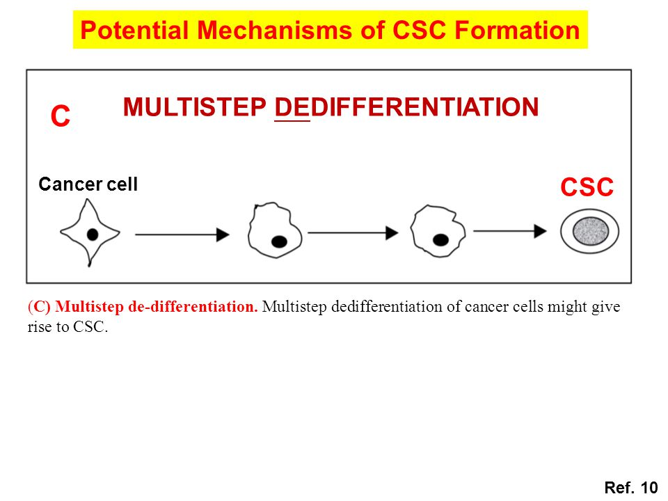 (C) Multistep de-differentiation. Multistep dedifferentiation of cancer cells might give rise to CSC. Potential Mechanisms of CSC Formation Ref. 10 CS