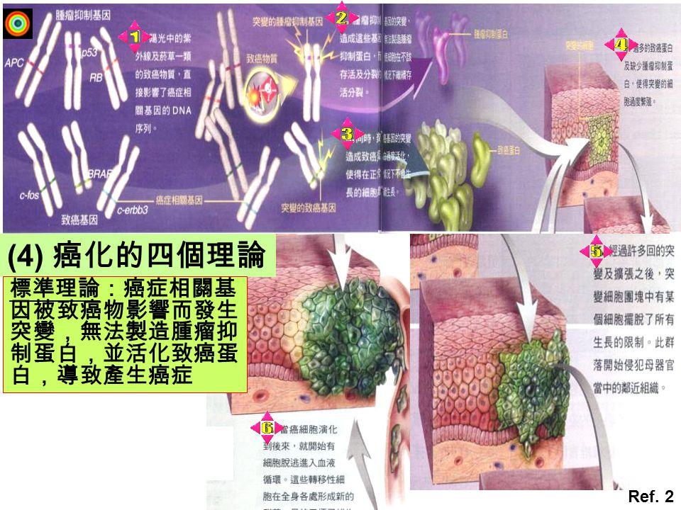 (4) 癌化的四個理論 Ref. 2 標準理論:癌症相關基 因被致癌物影響而發生 突變,無法製造腫瘤抑 制蛋白,並活化致癌蛋 白,導致產生癌症