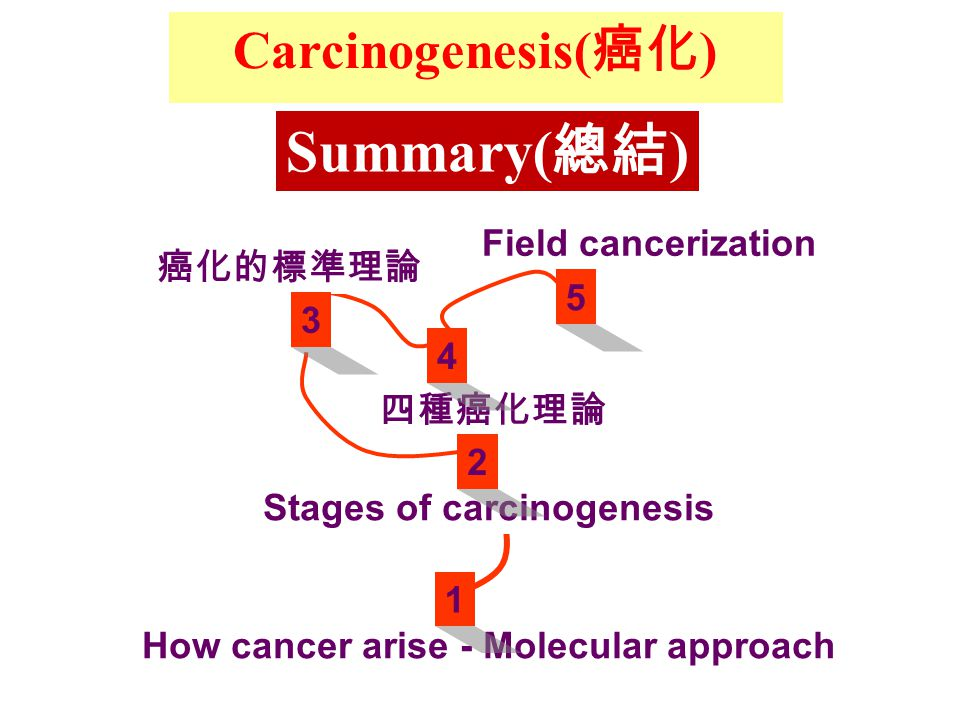 Carcinogenesis( 癌化 ) How cancer arise - Molecular approach Stages of carcinogenesis 癌化的標準理論 四種癌化理論 Field cancerization Summary( 總結 ) 1 2 3 4 5