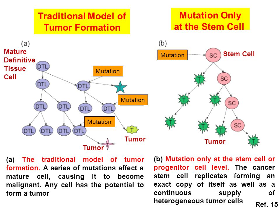 (a) The traditional model of tumor formation.