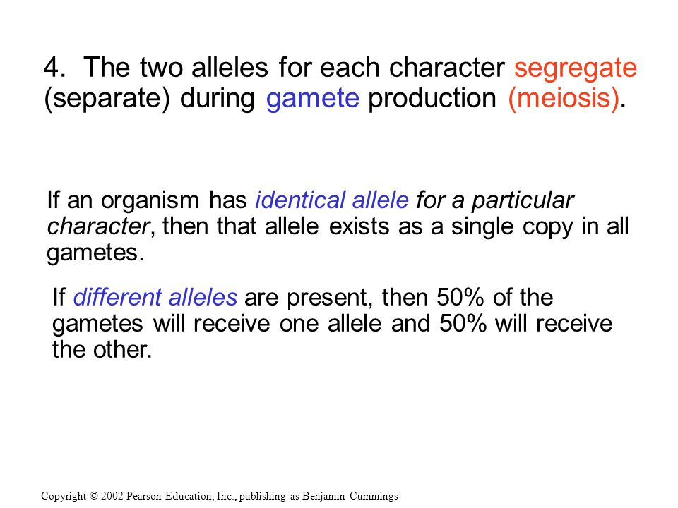4.The two alleles for each character segregate (separate) during gamete production (meiosis).