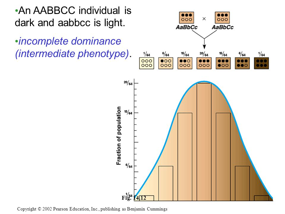 Fig.14.12 An AABBCC individual is dark and aabbcc is light.