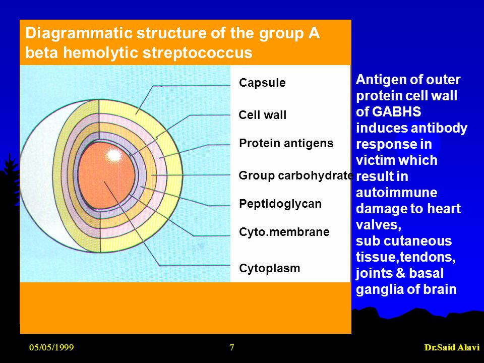 05/05/1999Dr.Said Alavi7 Diagrammatic structure of the group A beta hemolytic streptococcus Capsule Cell wall Protein antigens Group carbohydrate Pept