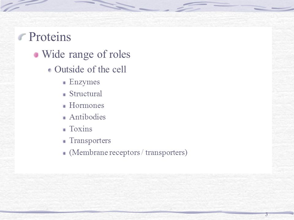 3 Proteins Wide range of roles Outside of the cell Enzymes Structural Hormones Antibodies Toxins Transporters (Membrane receptors / transporters)