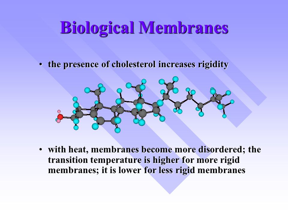Biological Membranes the presence of cholesterol increases rigiditythe presence of cholesterol increases rigidity with heat, membranes become more dis