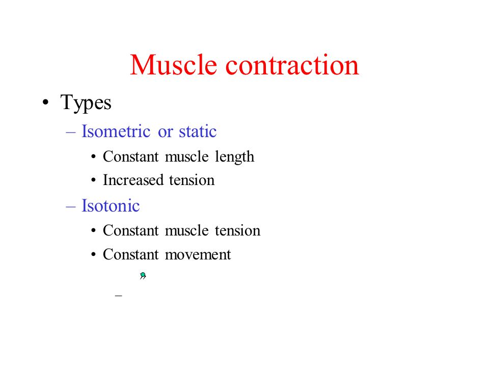 Muscle contraction Types –Isometric or static Constant muscle length Increased tension –Isotonic Constant muscle tension Constant movement » –