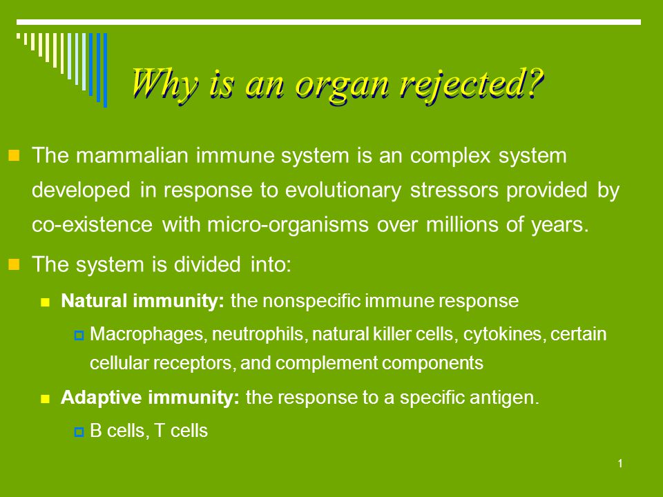 1 Why is an organ rejected? The mammalian immune system is an complex system developed in response to evolutionary stressors provided by co-existence