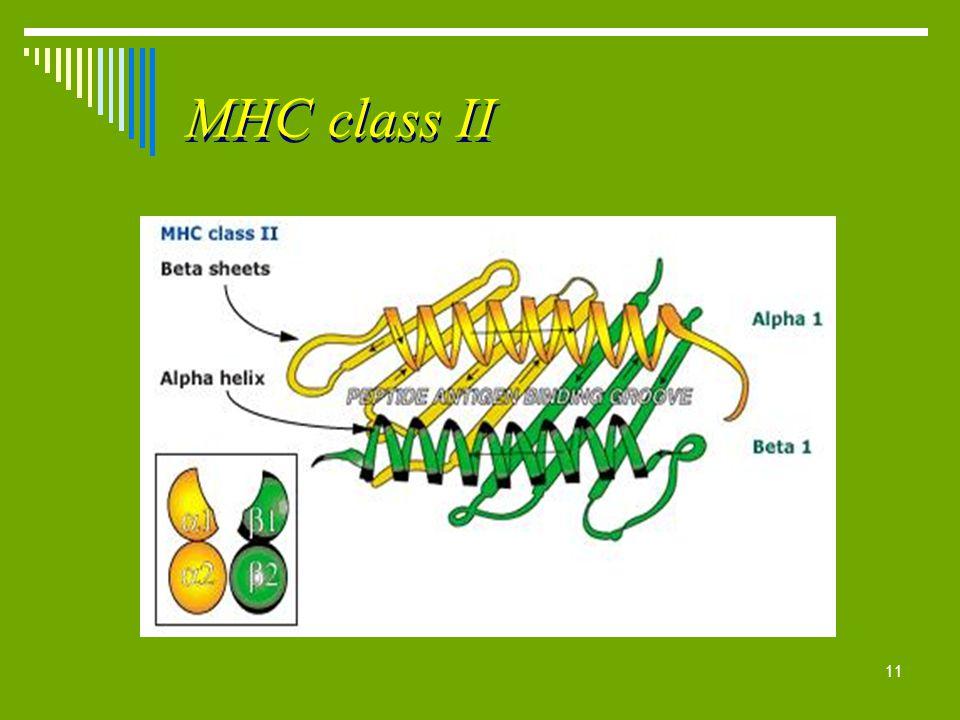 11 MHC class II
