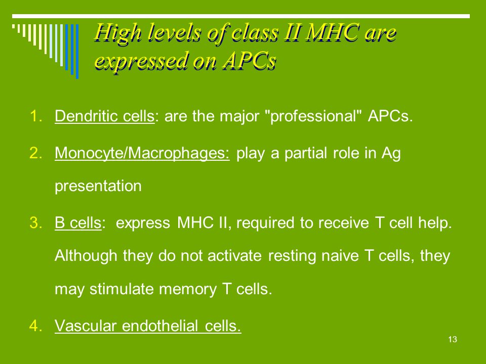 13 High levels of class II MHC are expressed on APCs 1.Dendritic cells: are the major