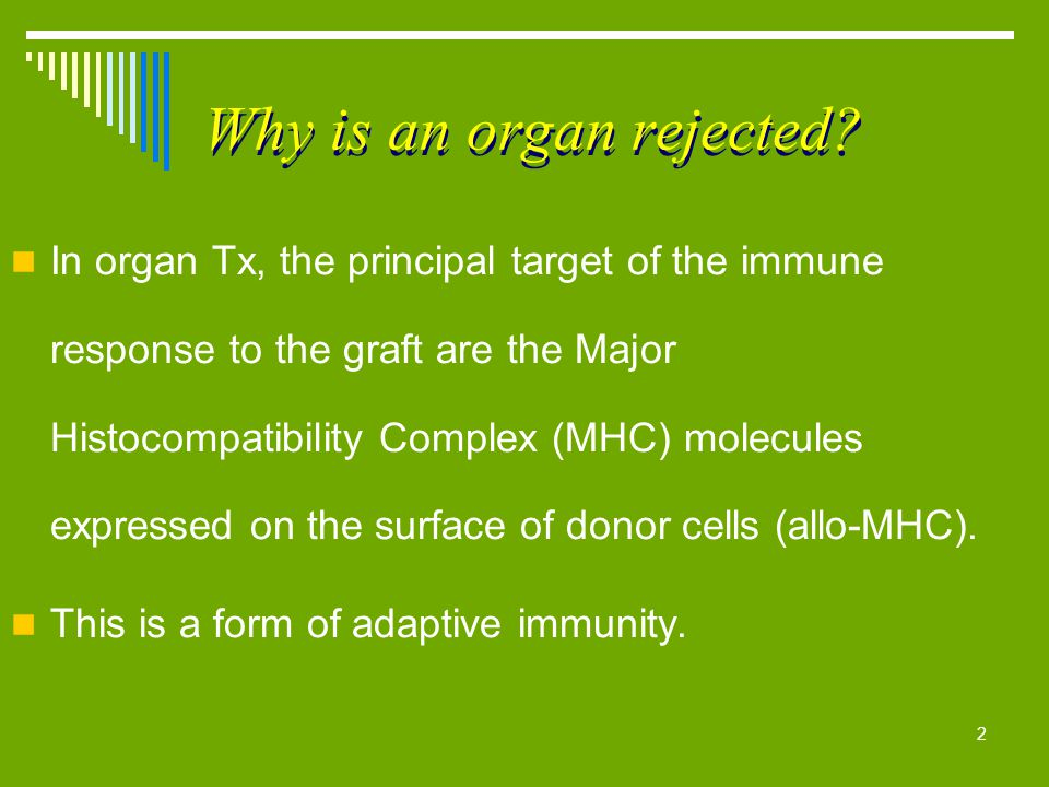 2 Why is an organ rejected? In organ Tx, the principal target of the immune response to the graft are the Major Histocompatibility Complex (MHC) molec