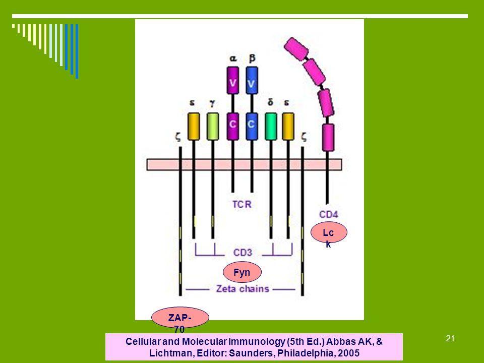 21 ZAP- 70 Fyn Lc k Cellular and Molecular Immunology (5th Ed.) Abbas AK, & Lichtman, Editor: Saunders, Philadelphia, 2005