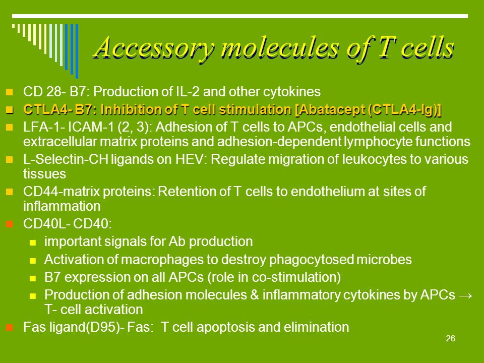 26 Accessory molecules of T cells CD 28- B7: Production of IL-2 and other cytokines CTLA4- B7: Inhibition of T cell stimulation [Abatacept (CTLA4-Ig)]