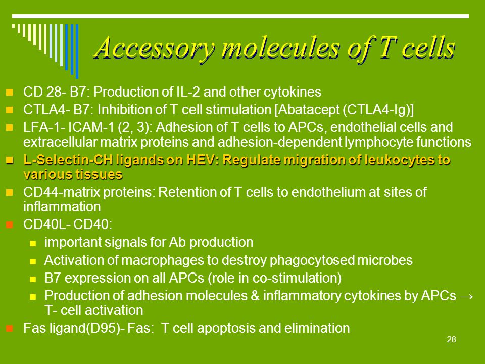 28 Accessory molecules of T cells CD 28- B7: Production of IL-2 and other cytokines CTLA4- B7: Inhibition of T cell stimulation [Abatacept (CTLA4-Ig)]