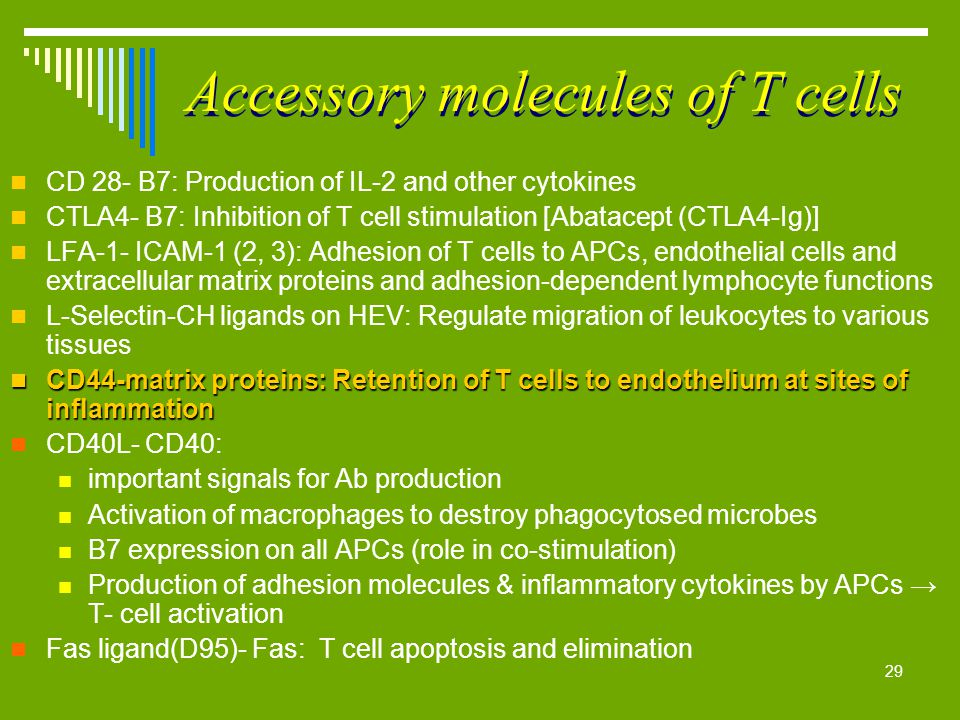 29 Accessory molecules of T cells CD 28- B7: Production of IL-2 and other cytokines CTLA4- B7: Inhibition of T cell stimulation [Abatacept (CTLA4-Ig)]