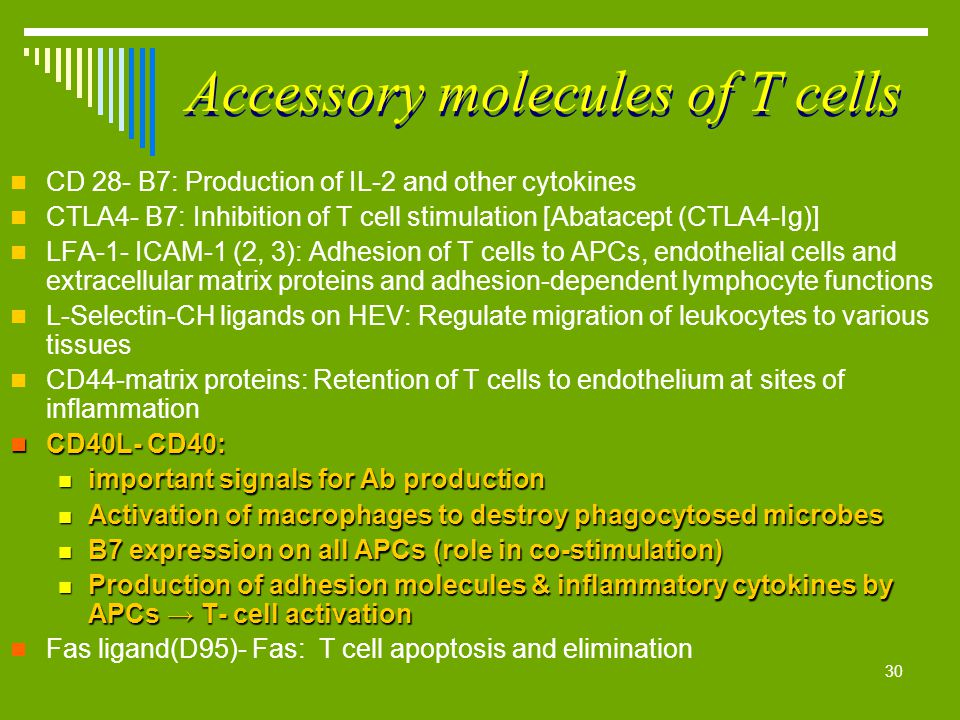 30 Accessory molecules of T cells CD 28- B7: Production of IL-2 and other cytokines CTLA4- B7: Inhibition of T cell stimulation [Abatacept (CTLA4-Ig)]