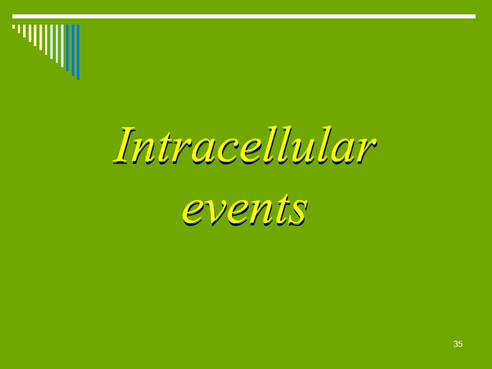 35 Intracellular events