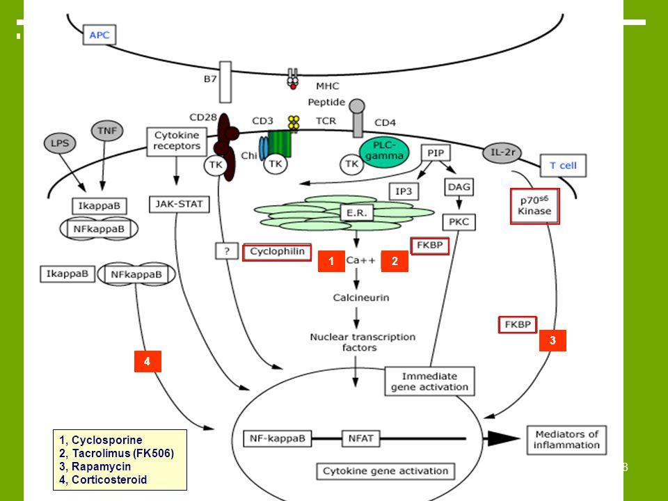 38 1, Cyclosporine 2, Tacrolimus (FK506) 3, Rapamycin 4, Corticosteroid 12 3 4