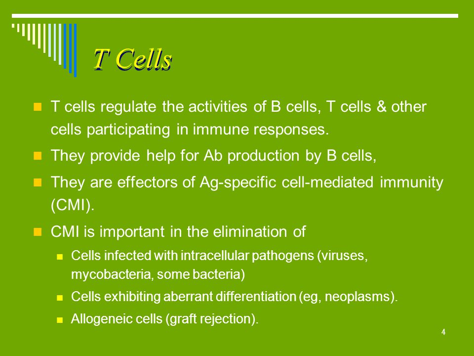 4 T Cells T cells regulate the activities of B cells, T cells & other cells participating in immune responses. They provide help for Ab production by