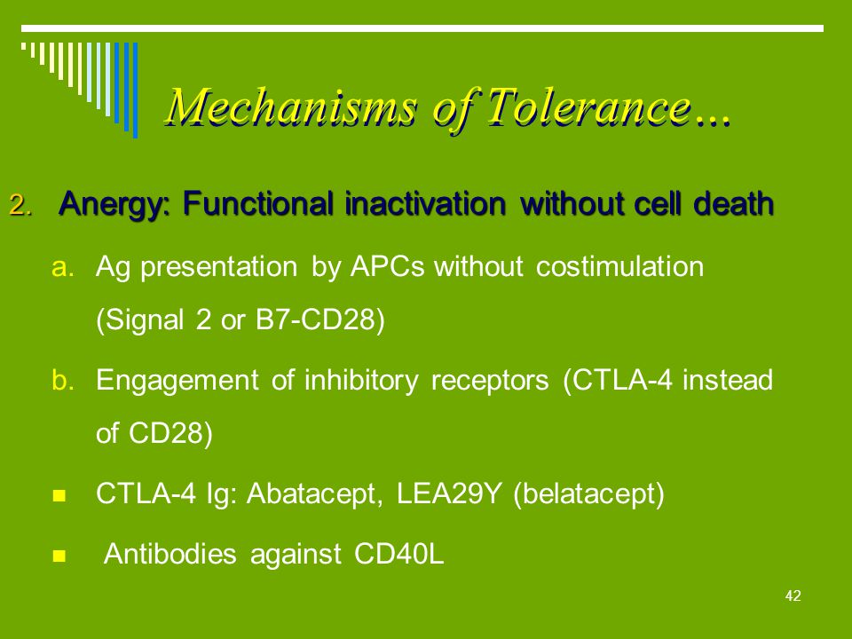42 Mechanisms of Tolerance… 2. Anergy: Functional inactivation without cell death a.Ag presentation by APCs without costimulation (Signal 2 or B7-CD28