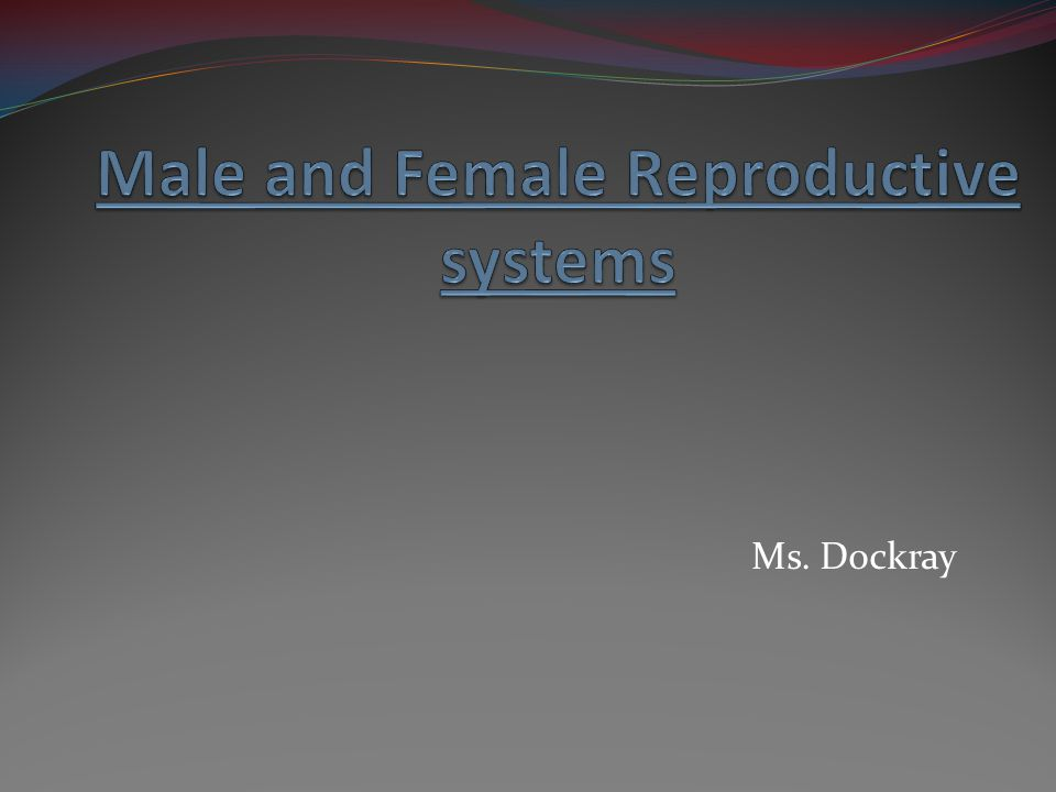 Functions of the Male Reproductive System.