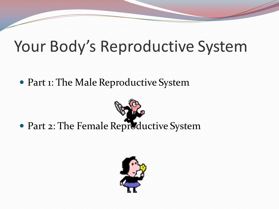 Part 2: The Female Reproductive System How, what, and why the female body does what it does!
