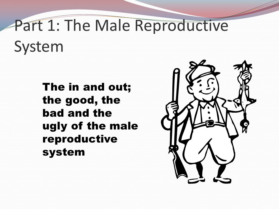 The Reproductive System Introduction