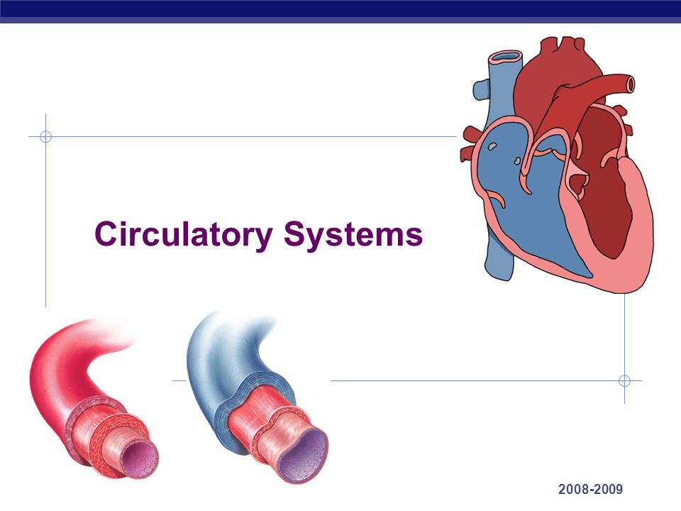 AP Biology 2008-2009 Circulatory Systems